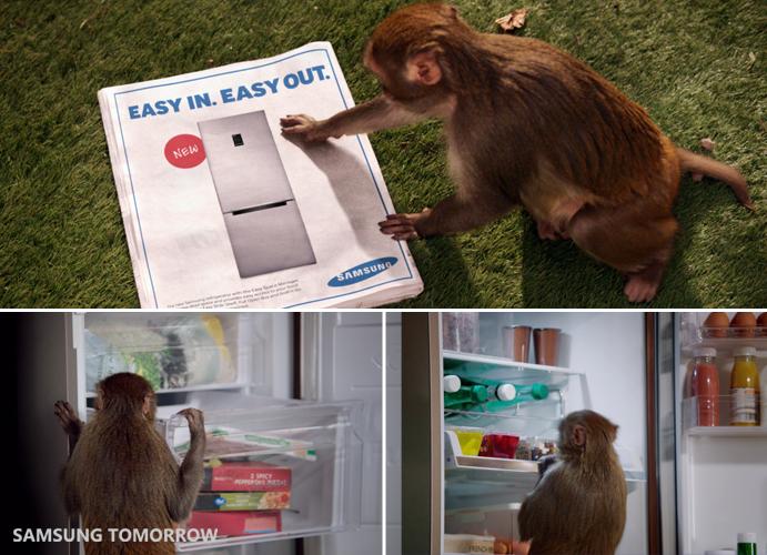 where did monkeys hide stolen food