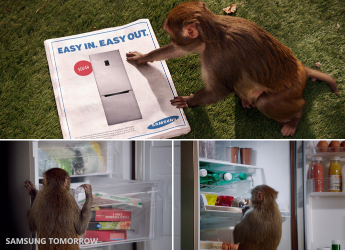where did monkeys hide stolen food