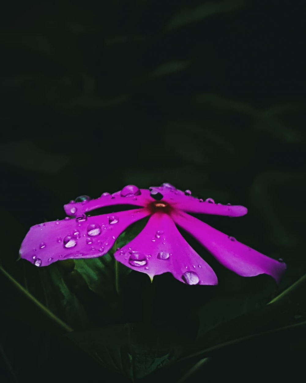Capturing Different Hues of Monsoon #withGalaxy - Image 3