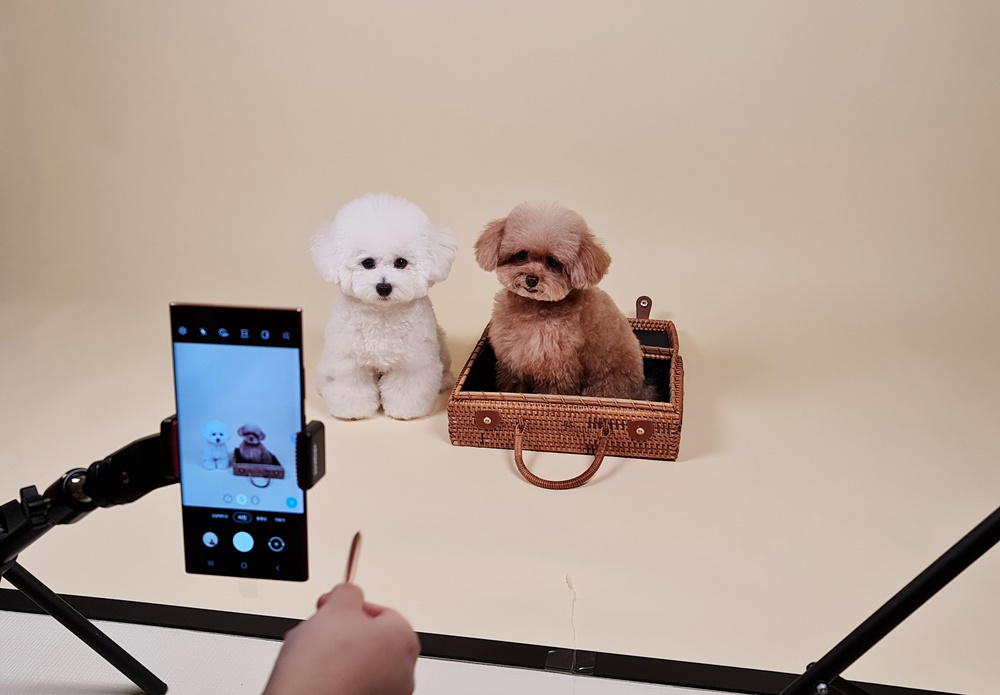 How to Capture Incredible Pet Photos and Videos With the Galaxy Note20 - Image 8