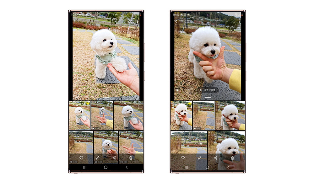 How to Capture Incredible Pet Photos and Videos With the Galaxy Note20 - Image 1