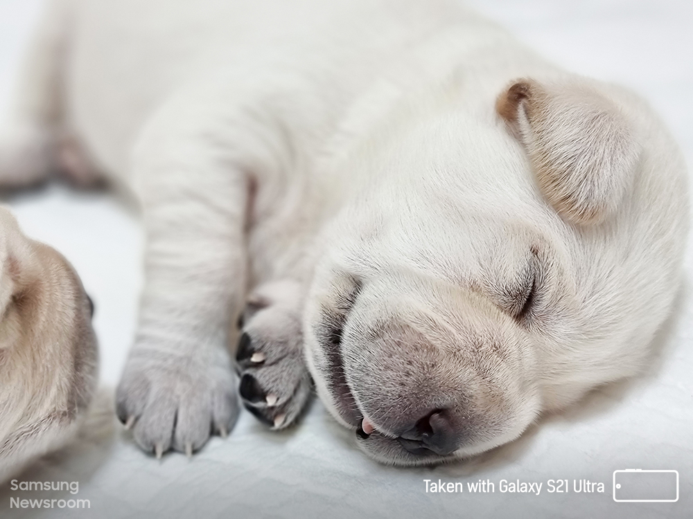 [Capture the World With Galaxy S21] Celebrating Our Essential Furry Friends This International Guide Dog Day - Image 7