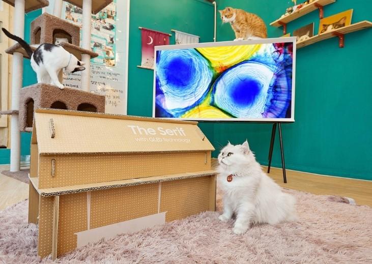 Samsung поздравляет пушистых и хвостатых с Международным днем домашних животных